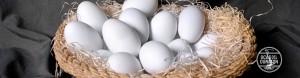 ocas-del-duraton-huevo-05